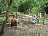building a bamboo fence: by ldeutch, Views[783]