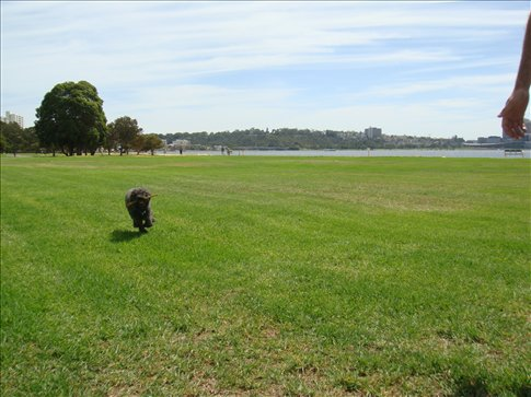 Pixie enjoying the open space along the river