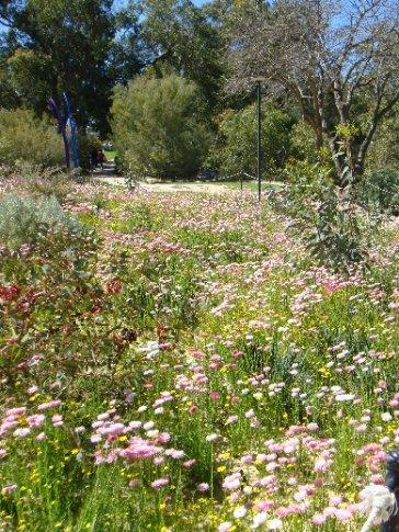 It's wildflower season in WA.