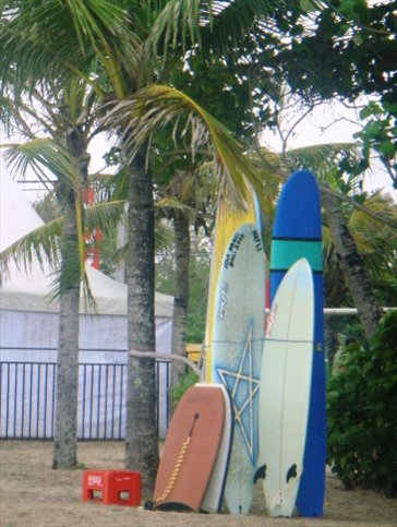 Surfboards for rent on the beach