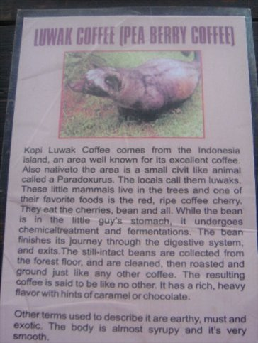 The story of the Luwak coffee