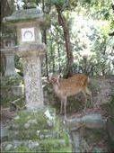 lantern and deer: by leah25, Views[196]