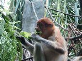 zoo: by leah25, Views[154]