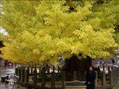 Arvore de 1200 anos, que na nossa opiniao eh a mais linda do mundo!: by leo, Views[1086]