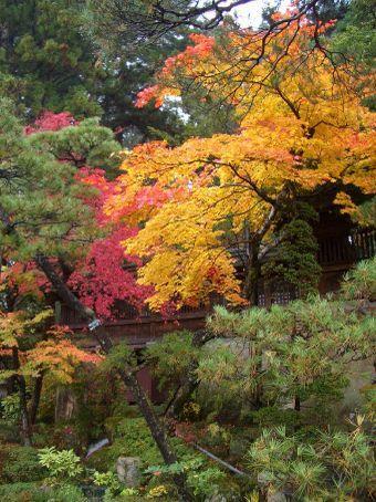 Acho que ter ido em Takayama no outono contribuiu para que essa cidade fosse uma de nossas favoritas no Japao.
