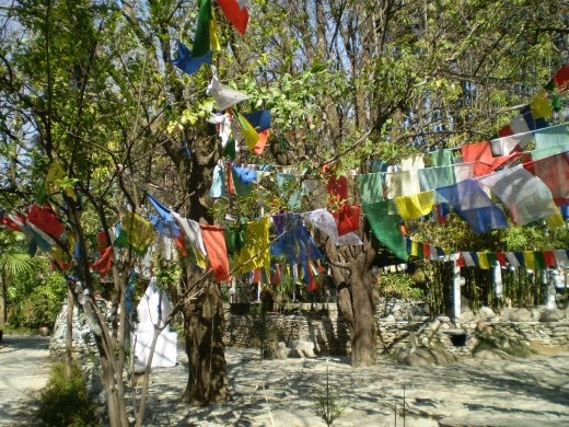 Tibetan prayer flags at Norbulingka in Dharamsala.