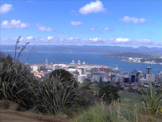 A view over Wellington, New Zealand's capital city.