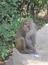 The monkey that stole my candy.: by libererladiva, Views[323]