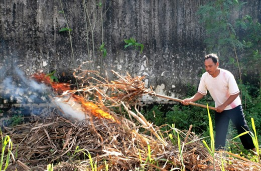 This is Mr. Nik. He lives a few blocks away, but his family owns a cane field behind my neighbourhood. The cane are harvest once in a year. After it's being harvested, the remaining plants have to be burnt before the farmers could plant the new plants. Mr. Nik works as a factory labor on week days and takes care of his field on Sundays.