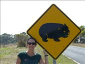 Wombats crossing!: by ligia-richard, Views[234]