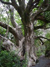 Crazy tree: by lijanne13, Views[172]