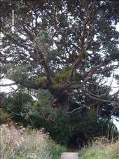 The P..Tree : by lijanne13, Views[168]