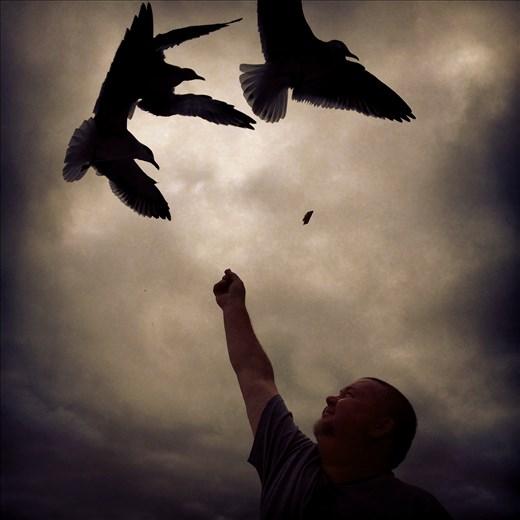 Dare To Dream:  boats, seagulls and family fun in Destin, FL