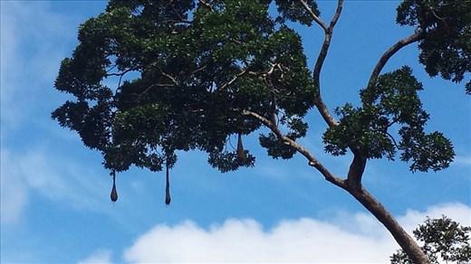 2 bird nests hanging from tree
