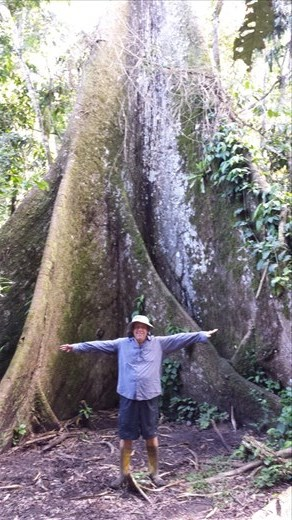 Big tree along the way to see the local shaman.