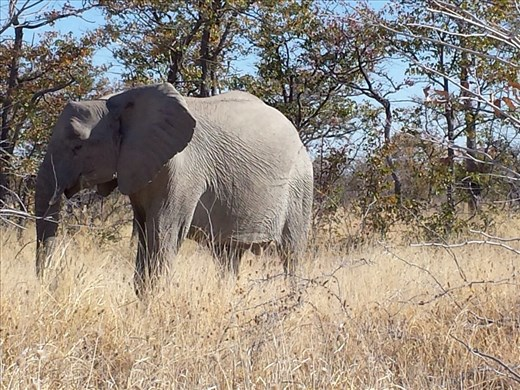All pictures from Etosha National Park Namibia. I'll write more later, no time now.