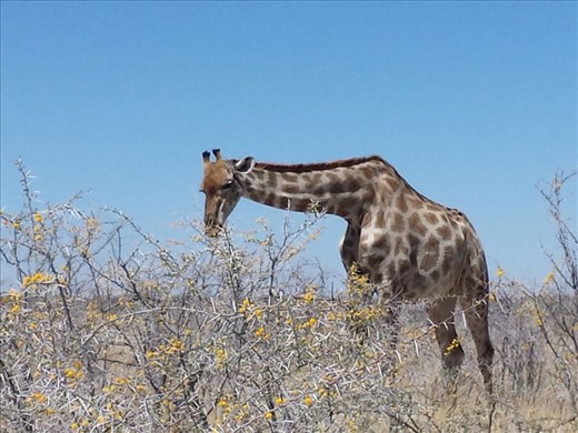 Very close to the giraffe and the only person at the site. I must have said to myself  a 100 times during the trip