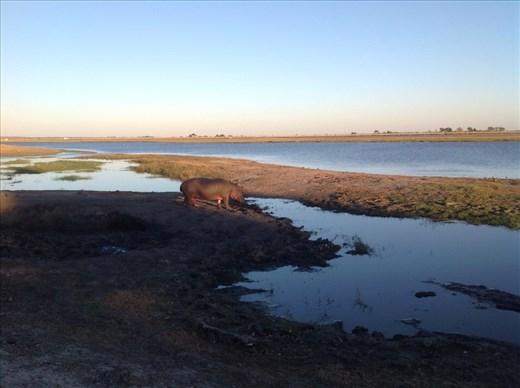 Sunrise Chobe National Park, Botswana