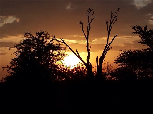 Sunrise Serengeti