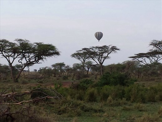 Balloon over the Serengeti  at sunrise. Two of the guys I was traveling with did the balloon ride. An air safari, birds eye view of the animals. Expensive, close to $500. US. The guys said it was worth it for the once in a lifetime experience .