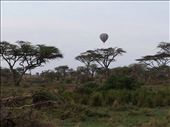 Balloon over the Serengeti  at sunrise. Two of the guys I was traveling with did the balloon ride. An air safari, birds eye view of the animals. Expensive, close to $500. US. The guys said it was worth it for the once in a lifetime experience .: by lipowcan8, Views[137]