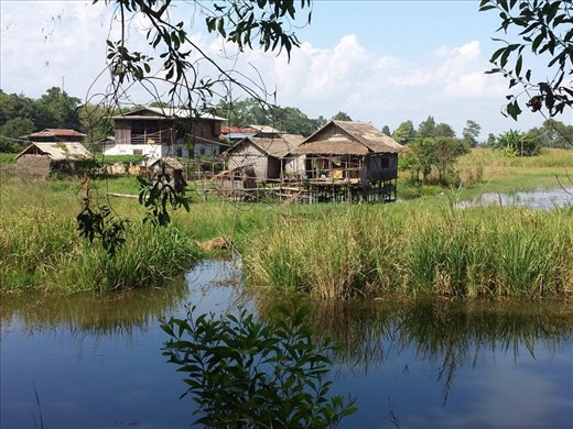 View from bike. Rode through rice fields, very pretty.