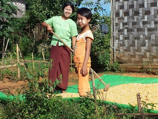 Drying corn, I'm guessing for cattle feed. The substance on their faces is used as sun protection and a form of fashion.