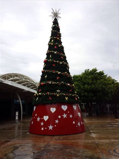 Quite a shock to walk out of the Sydney airport and see a Christmas tree. Between time passing so quickly and being in non Christian countries it really surprised me.