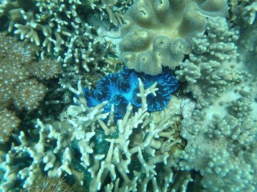 Underwater magic - Pemuteran Bali