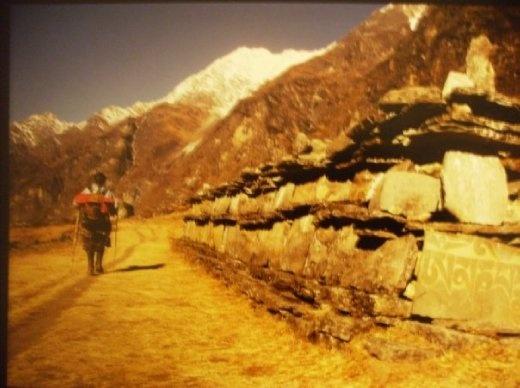 Walking through Langtang