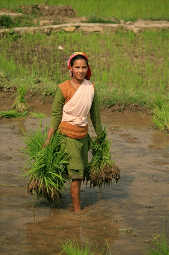 While documenting the life of women in Uttranchal I found that women have different phases but have to work hard where as men don't do as much hard work. Here a young girl is working in fields - Uttranchal