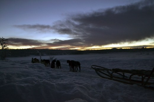 Tourism has encouraged the fascination of the Sami people with many tours including husky/dog sledding. Many of the tours will take you out into the snowy wilderness where you cannot see anything but snow and trees.