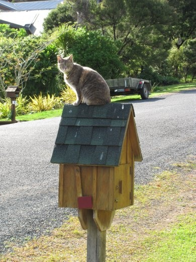 Ines & John's cat - waiting for the mail!