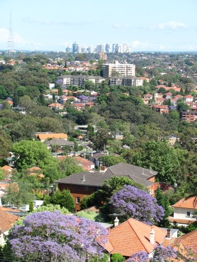 More views from Tony's flat - lots of Jacaranda trees in bloom.