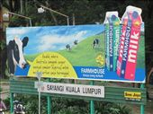 Greg felt right at home seeing this ad for Aussie milk! (dairy products are rare in Malaysia): by locomocean, Views[145]