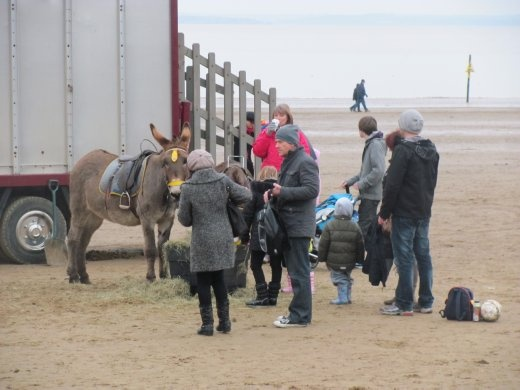 The donkeys are still on Weston-super Mare beach. Karen remembers them from childhood days.