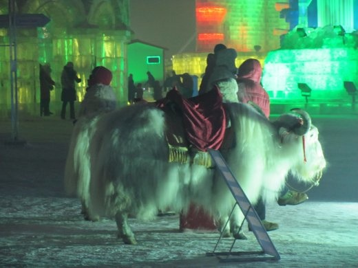 Anyone for a Yak-ride?