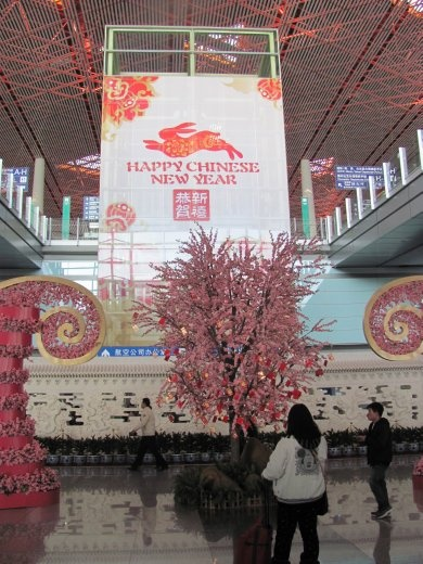 We arrived in Beijing just in time for the Chinese New Year - and just in case you hadn't noticed, it's the year of the rabbit!