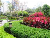 Bright, delicately manicured gardens at the side of the Convention Centre, Hong Kong Is.: by locomocean, Views[96]