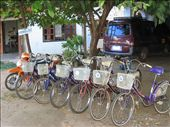 Bikes for rent....so cheap and sweet, you feel like you've gone back in time riding around on these.: by lolo, Views[449]