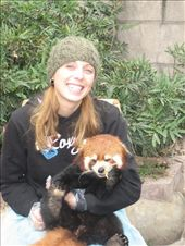 Me with a little wee red panda! They made me wear plastic gloves and I got to feed him apples to keep him happy.  So cute!: by lolo, Views[412]