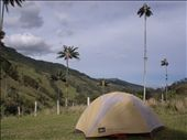 Parque de Cocora - Salento: by loloberlin, Views[415]