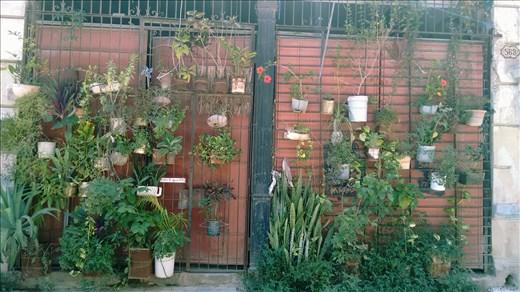 Huertos urbanos en comunidades vecinales con auto gestión