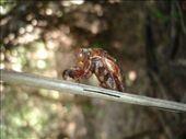 Pantanal - bugs: by lou, Views[269]