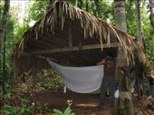 Amazon jungle - sleeping in hammocks: by lou, Views[387]