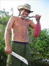 Amazon jungle - tree fruit: by lou, Views[181]