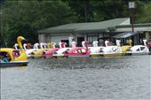Wonderful swan boats.: by loveadventures, Views[90]