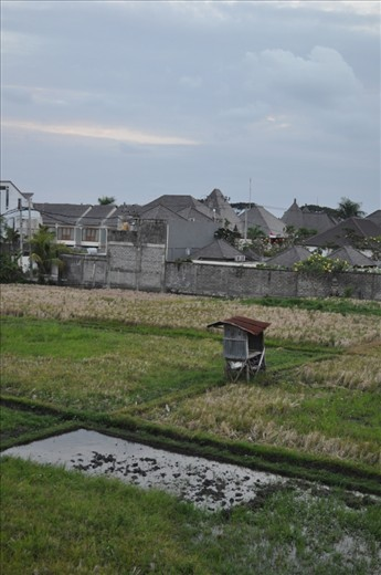 One of my favourite photo's from Bali.  Its from the holet I was staying with which a rice patty inbetween it and the next property.  It shows that even with new structures all around it old farming roots still are strong even in the hustle and bustke of Bali.