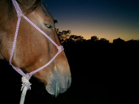 My horse being readied for riding out at 7am, means we catch horses in the dark before the sun has come up. Loads of fun!