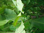 Really tiny bananas!: by lucyandtim, Views[138]